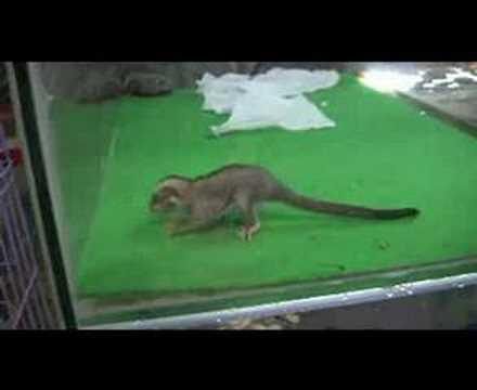 Illegal wildlife trading in bangkok, thailand caught on film