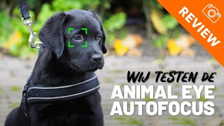 Animal Eye Autofocus test met Sony A6100 - Zo laat je je foto's tot leven komen!