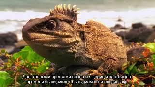 Скрытая история человечества: Русские субтитры.