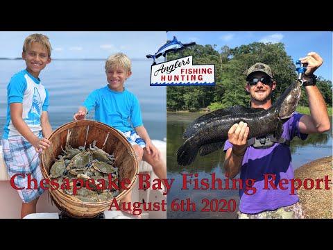 Chesapeake Bay Fishing Report: August 6th 2020
