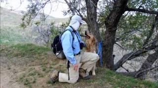 Cage Free Dog Boarding In Granada Hills, Ca  [video]