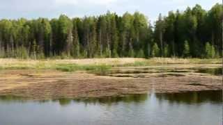 Белая Холуница. Водохранилище 2. Кировская область