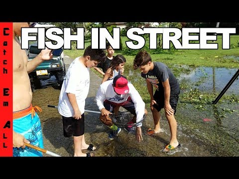 FISH IN THE STREET During FLOODING HURRICANE! Saving 100s of EXOTIC Fish!