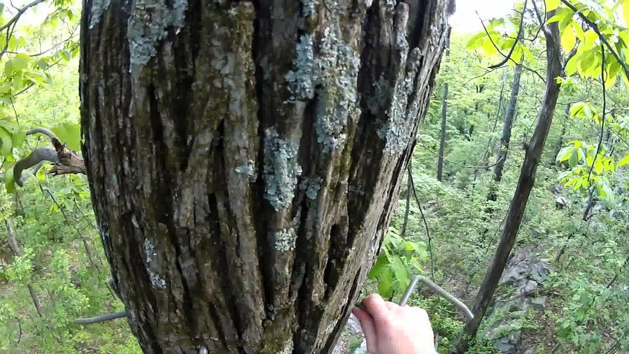 Saddle Hunting Tree Setup Video Youtube