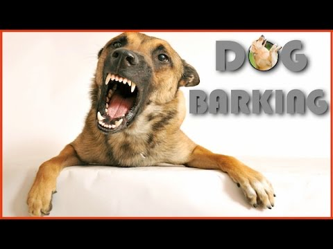Dog Barking Sound Effect in Best Quality