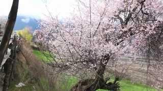 Inside Tibet 2014 - Trip To Lingzhi 林芝波密羊湖