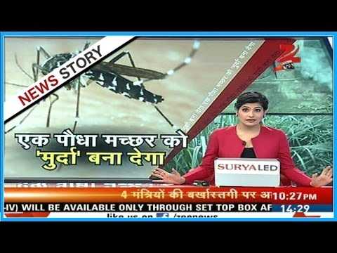 Aap Ki News | Plant a tree and get rid of mosquitoes
