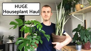 HUGE Houseplant Haul | September 2018
