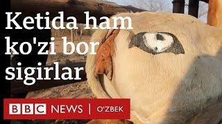 Кетида ҳам кўзи бор сигирни кўрганмисиз?  BBC News O'zbek
