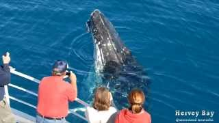 Whalesong Cruises Whale Watching Hervey Bay TV Ad Thumbnail
