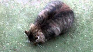 Кормление кота Серёжи