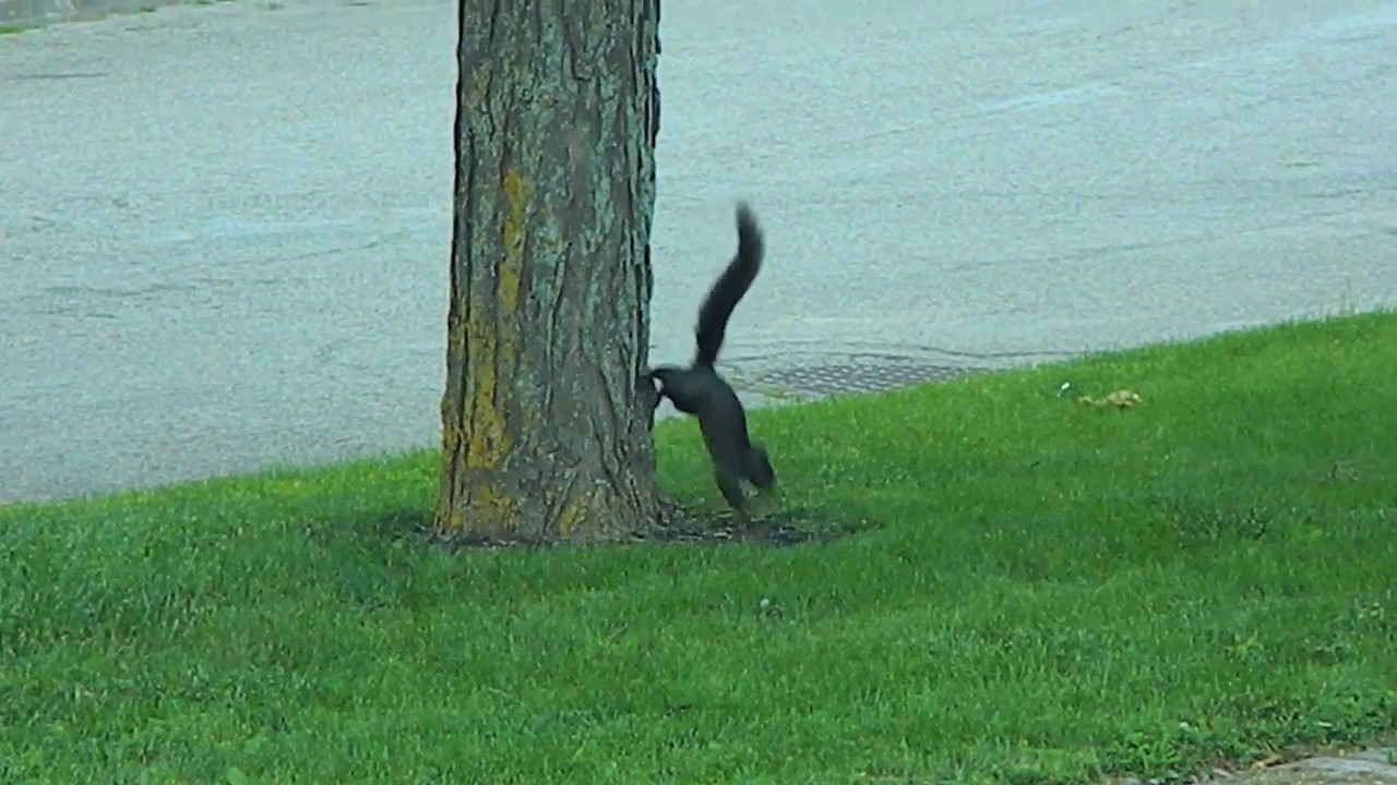 we-re-not-sure-what-this-squirrel-is-doing-but-it-s-entertaining-to-watch