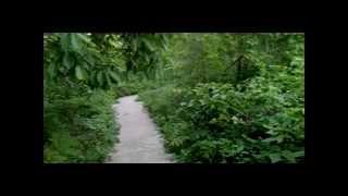 Sitakunda Botanical Garden