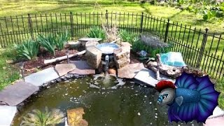 Diy Pond Filter Under $20