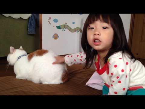 Battle of Animals! Cat is poor!