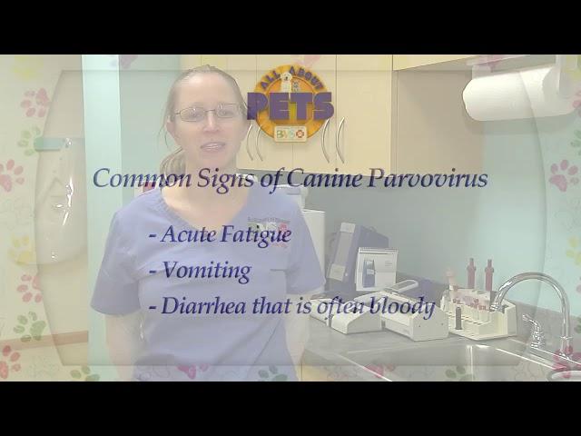 All About Pets - 4/12/18 Parvovirus, Audrey Gale-Dyer, DVM, Locum Emergency Veterinarian