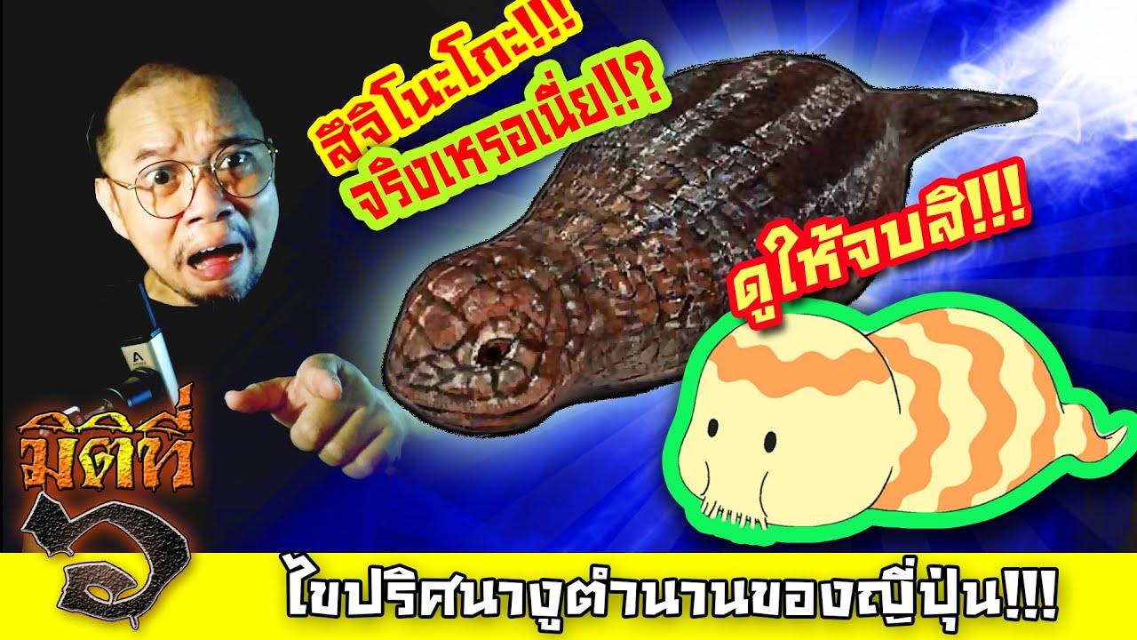 ツチノコ - ไขปริศนา สึจิโนะโกะ งูตำนานของญี่ปุ่น !!!
