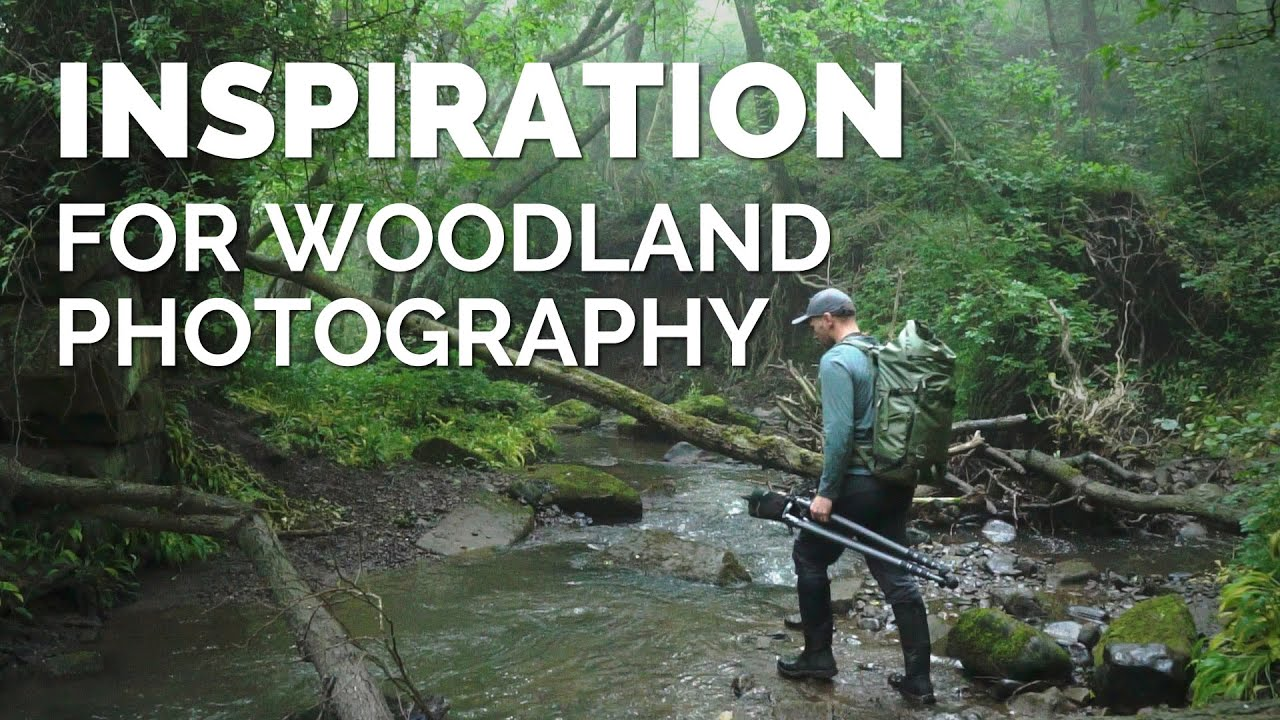 Inspiration for your Woodland Photography