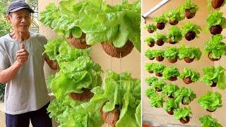 Download lagu Amazing Hanging Vegetable Garden, Growing Vegetables in Dry Coconut Shell