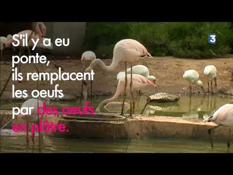 Série sur les animaux du Parc Zoologique de Paris: 20 espèces d'oiseaux cohabitent dans la volière