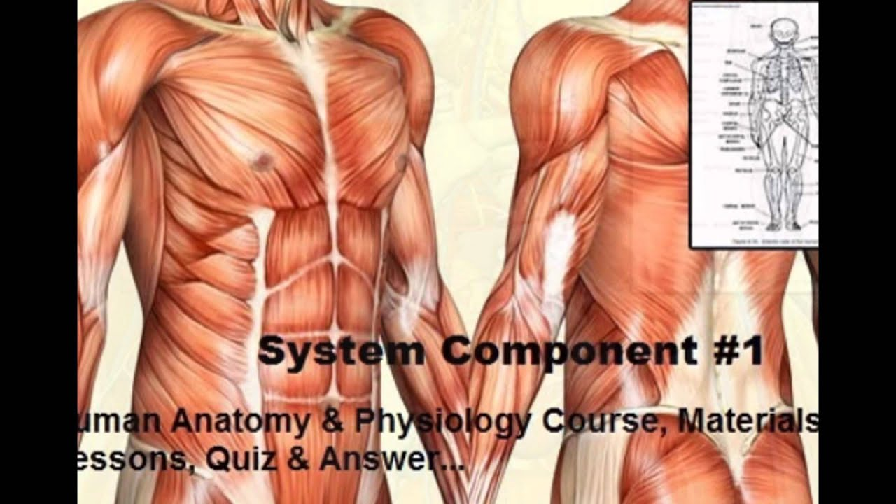 Complete Human anatomy & Physiology Home Course - YouTube
