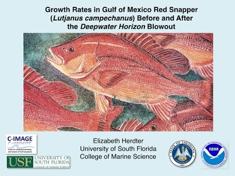 Growth Rates in Gulf of Mexico Red Snapper Before and After the Deepwater Horizon Blowout
