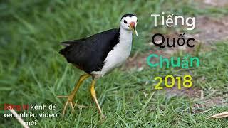 Bẫy quốc | Tiếng chim quốc chuẩn để bẩy 2018