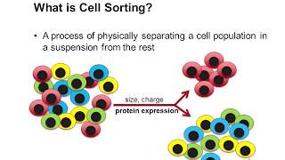cell sorting using flow cytometry - youtube  youtube