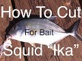 How To Cut & Hook Squid