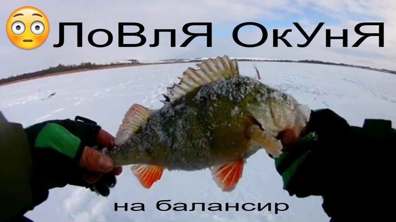 Хорошее время для ловли окуня зимой
