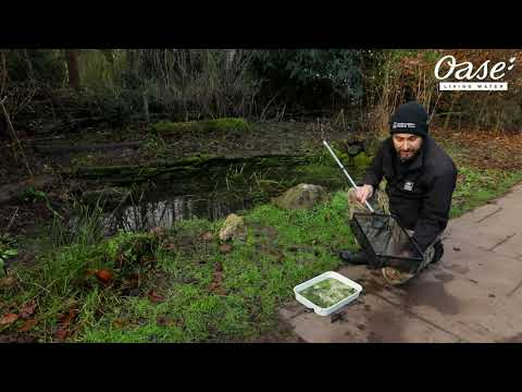 Pond Dipping With The Staffordshire Wildlife Trust