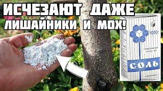 Долой химию! Соль прекрасно спасает наш сад уже 80 лет от болезней и вредителей! Опрыскайте осенью