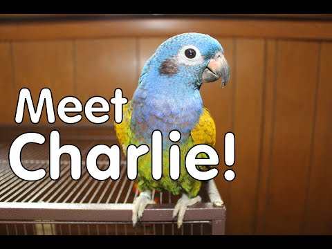 MEET CHARLIE! Our 4th Parrot!!!