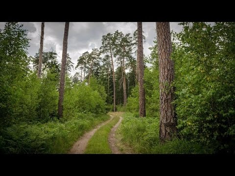 Bialowieza Europe's Last Primeval Forest - Around The World