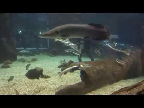 Объявления о продаже рыбок, фильтров и насосов раздела аквариум в москве на avito.
