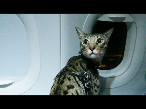 No Travelling By Air For Cats!
