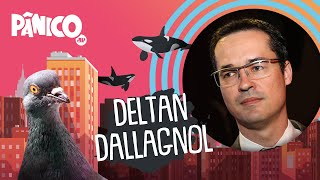 DELTAN DALLAGNOL - PÂNICO - AO VIVO - 02/07/20
