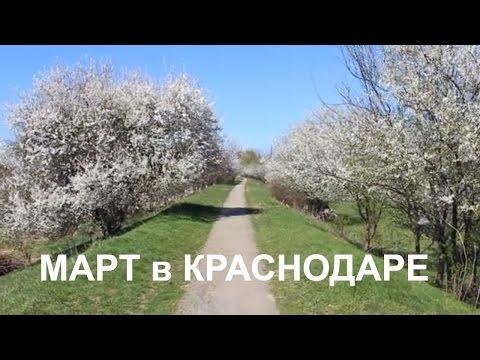 Переезд в Краснодар. Март в Краснодаре. Цветут деревья. Весна в Краснодаре. Кубань в цвету.Переезд.