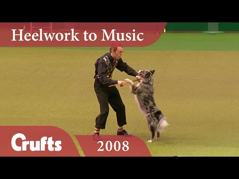 Heelwork to Music Competition 2008 | Crufts Dog Show