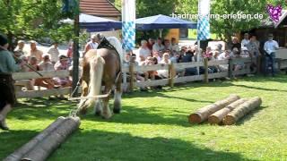 Bad Füssing erleben: Kaltblut-Tag am Haslinger Hof in Kirchham