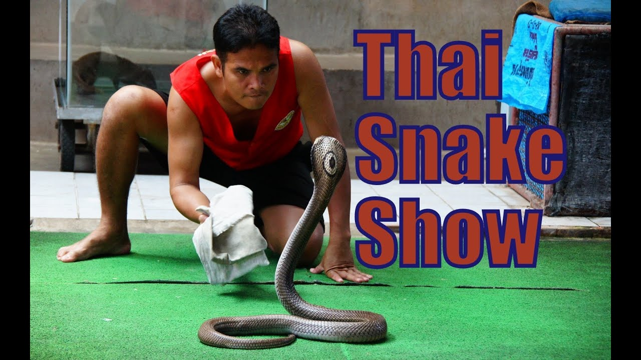 snakes – Visit our new retail location at 1987 E. Main St, Ventura ...