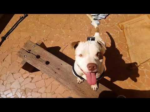 PirataFilmador - Pets Na Net