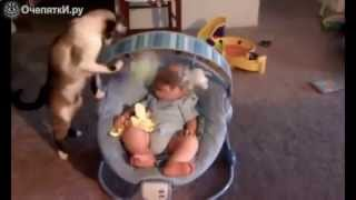 Кошки и дети смешное видео!