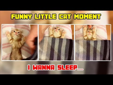 Funny Cat Video Compilation 2019 Try Not To Laugh Challenge 2019 Best videos funny cats #9