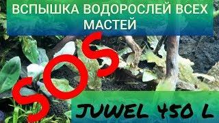 SOS Вспышка водорослей в аквариуме всех мастей!!!  Аквариум Juwel 450л. Часть 17.