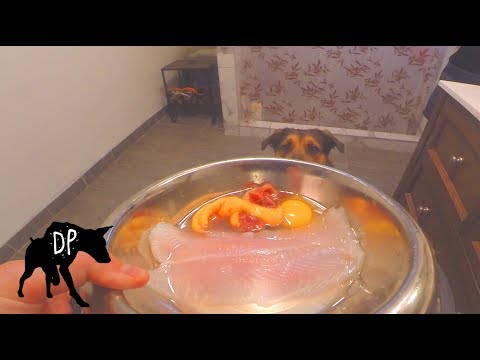 Pitbull German Shepard mix eating raw fish and chicken feet