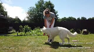 Урок 2 Как работать с диском и научить собаку ловить роллы