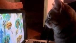 ВЛАДИК ОХОТИТСЯ НА ВИННИ-пуха. [Котенок любит смотреть мультфильм Винни-Пух,приколы с животными].