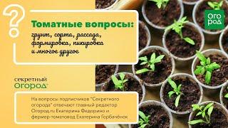 14 вопросов про томаты фермер и главный редактор Огород ru отвечают на вопросы читателей