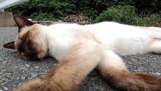 野良猫の昼寝を観察する